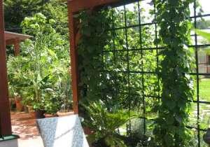 Begrünte Pergola-Wand mit Glas-Überdachung